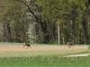 stroegen_2010-04-28_20_rehe